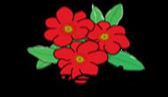 Nasiona Grzesiak